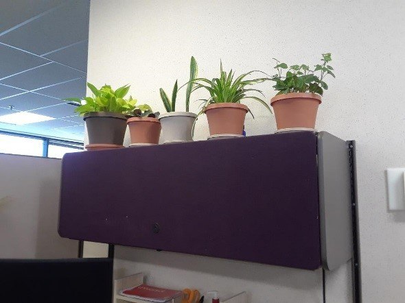 potted plants in office