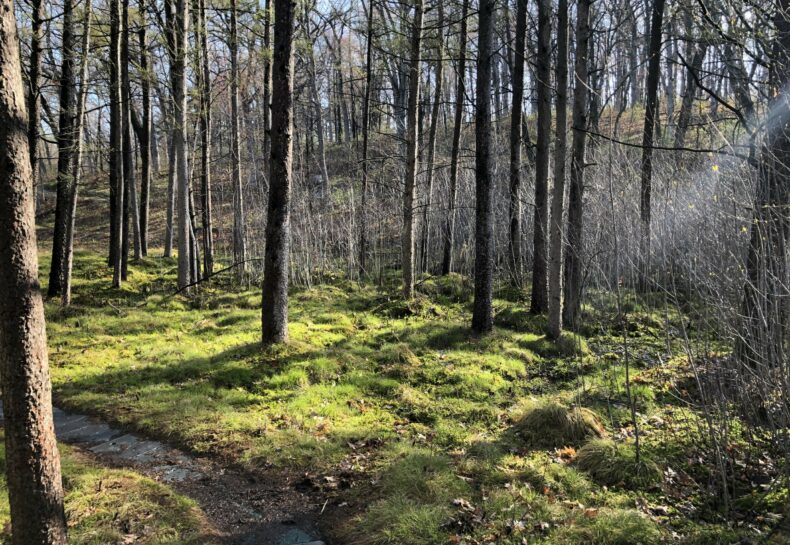 Blog About a Bog