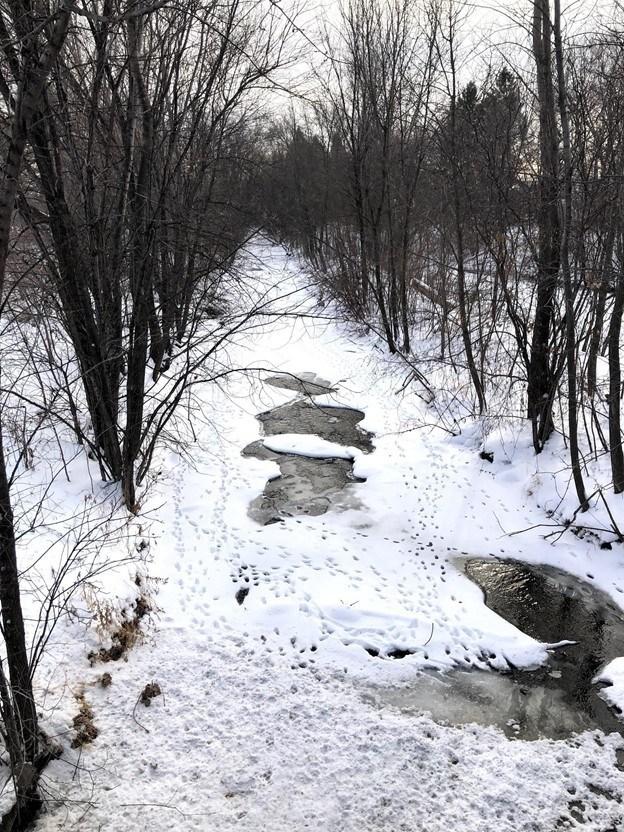 frozen stream