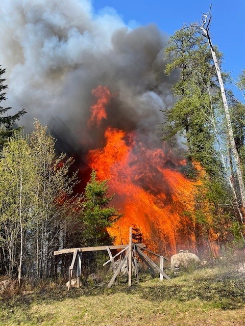 wildfire in pine forest