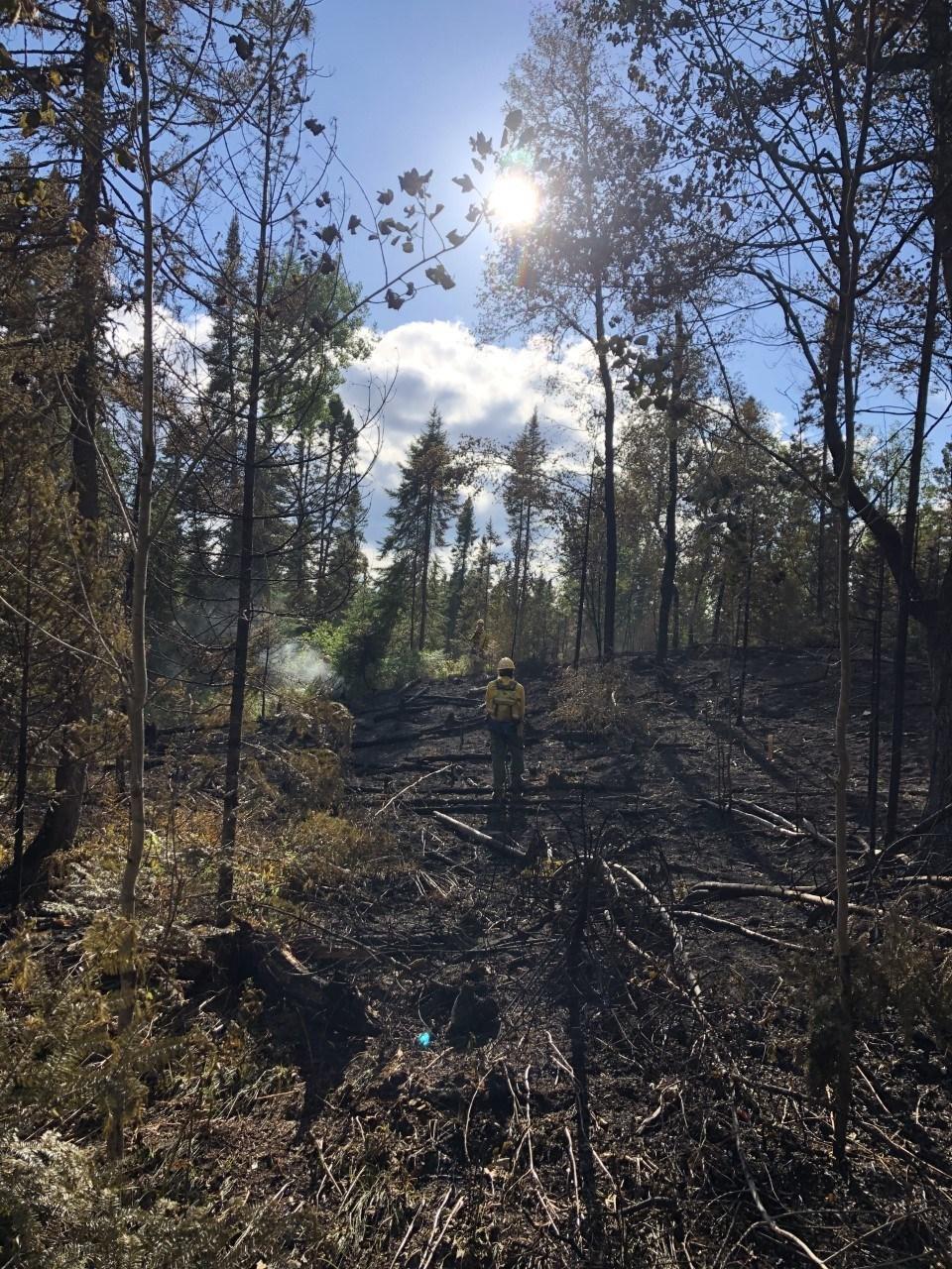 member standing in burned forest