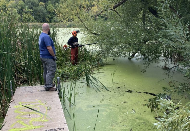 Ponds and Problem Solving