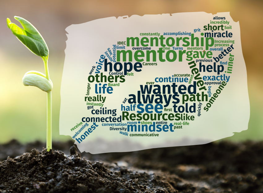 Word cloud in shape of leaf with mentor and mentorship as biggest words.