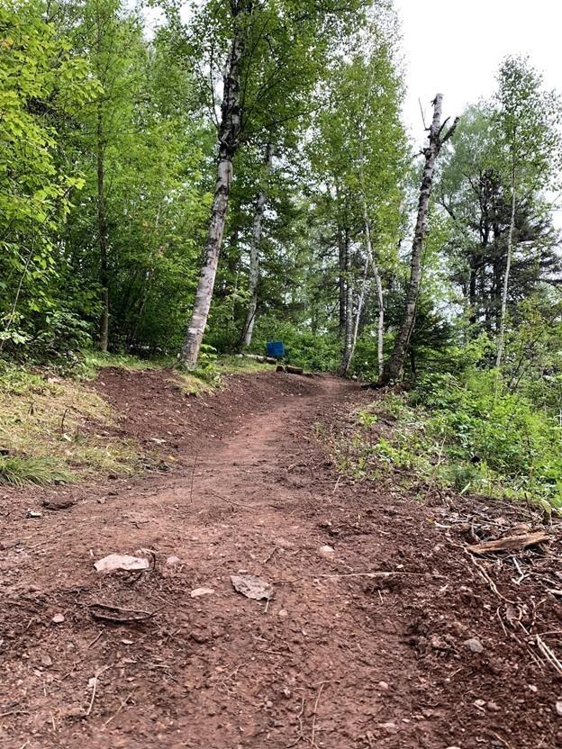 fresh dirt trail in forest